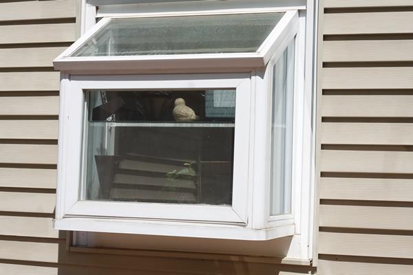 Garden windows picture