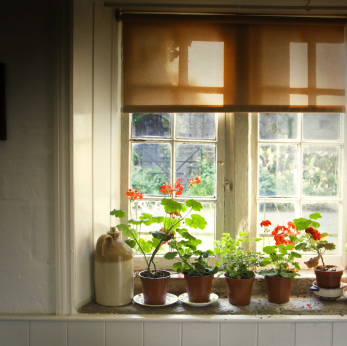 Window shades picture