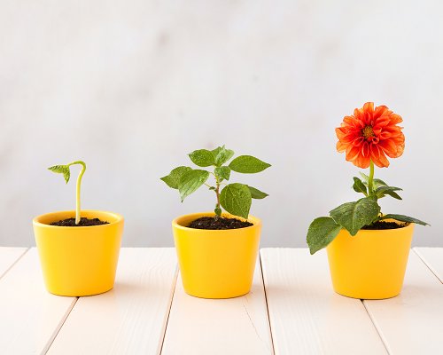 Painted flower pots with flowers in three stages of growth