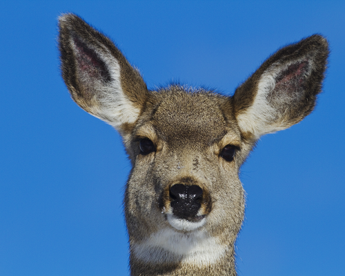 Deer against blue sky