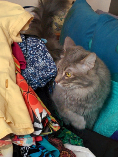 Cat in pile of clothes