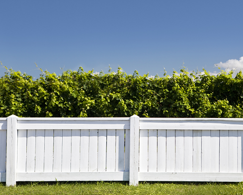 White picket fence around a yard with a hedge
