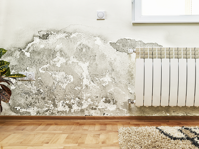 Mold damage on a wall